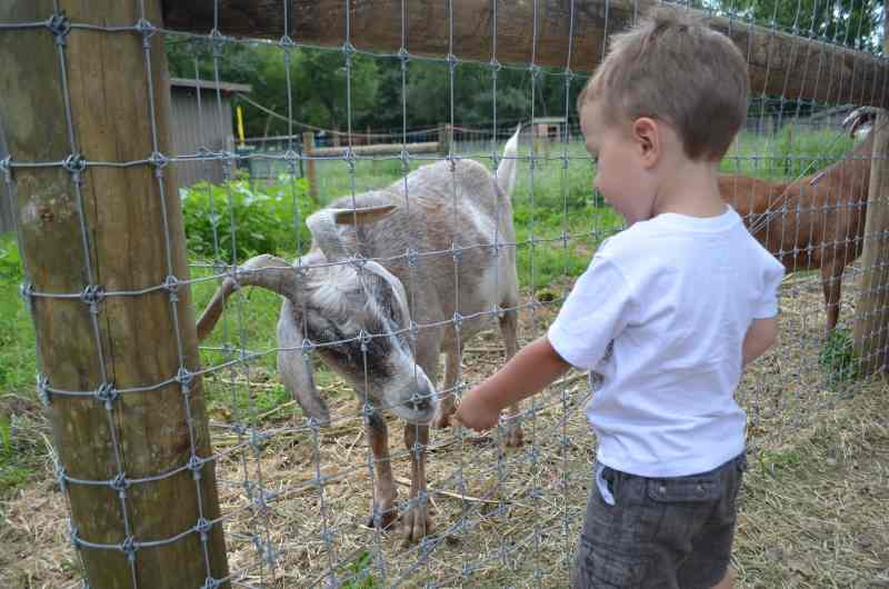 First Visits: Queens County Farm Museum, a Remarkable Place in a Big City