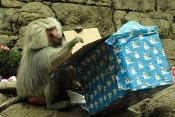 Presents to the Animals: Geoffrey Tamarins and North American River Otters